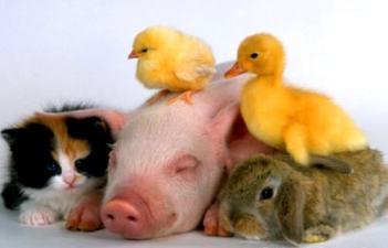 baby-animals-baby-animal