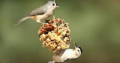 Two birds on a birdfeeder