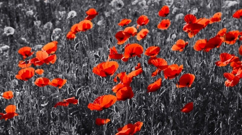 Remembrance Sunday – Lest we forget