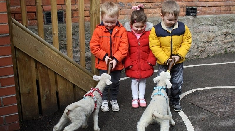 Children at The Nursery in Portishead welcome newborn lambs