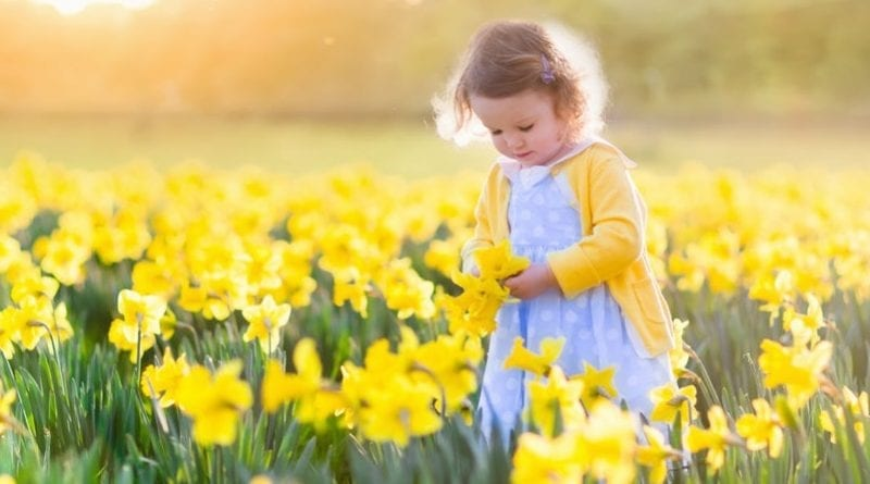 Little girl walking in a field full of daffodils.
