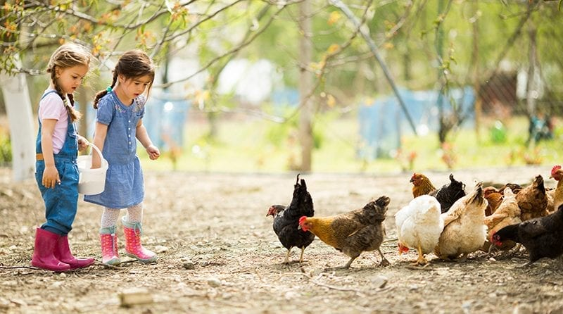 two little girls feeding chickens outdoors