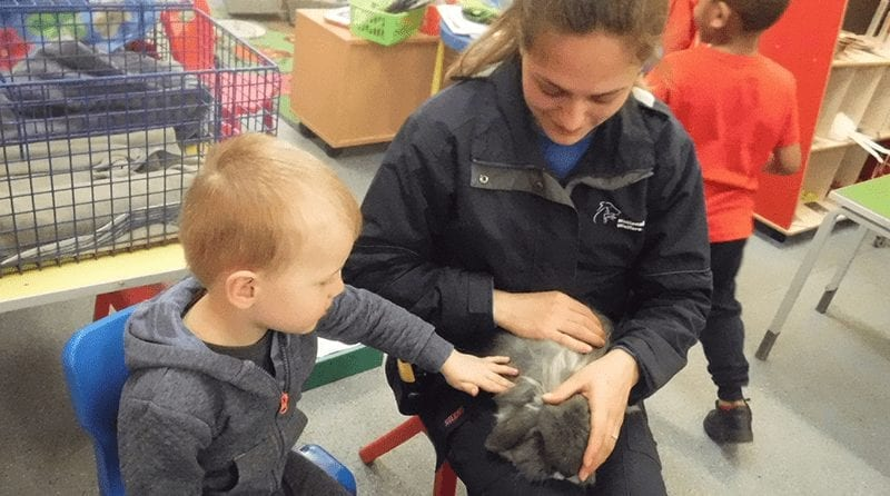 Little boy gently strokes a fluffy bunny rabbit that is being held safely by an adult