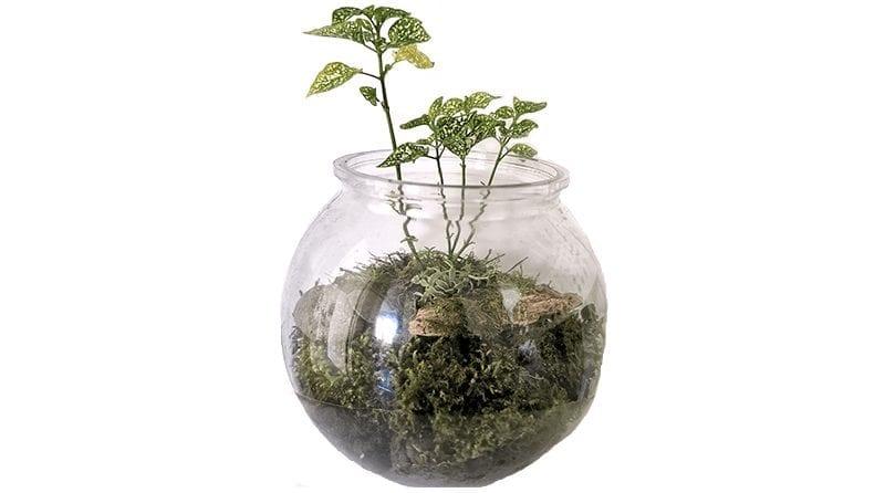Mother Earth terrarium